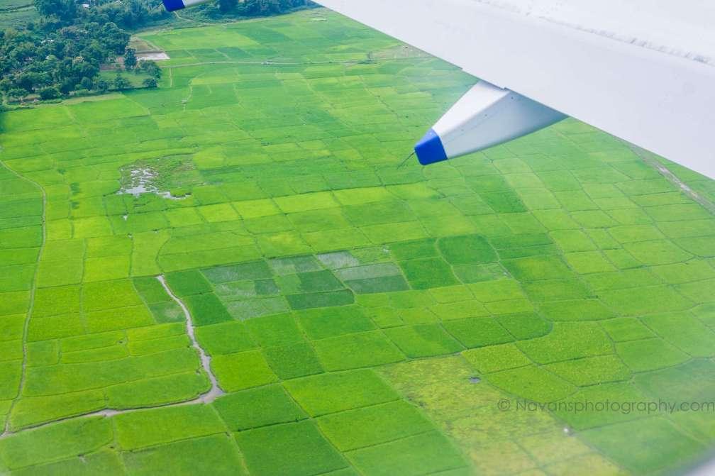 Flight, Greens,